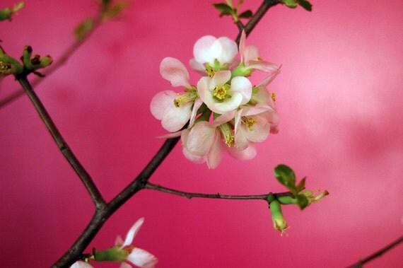 magnolia on pink wall, photo notecard