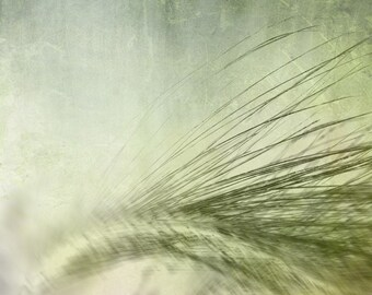 Summer blur  (single greeting card, photo art print and envelope)