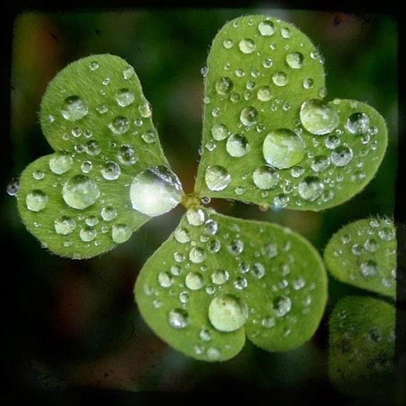 Luck of green love, Fine art photograph, print 8x8