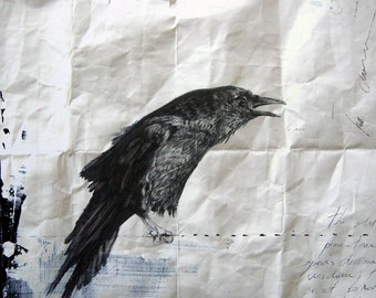 Crow study IV - Limited Edition Fine Art Print