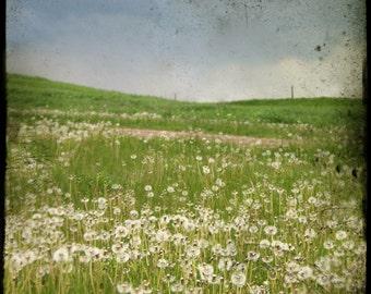 The Field II - Original FIne Art Photograph