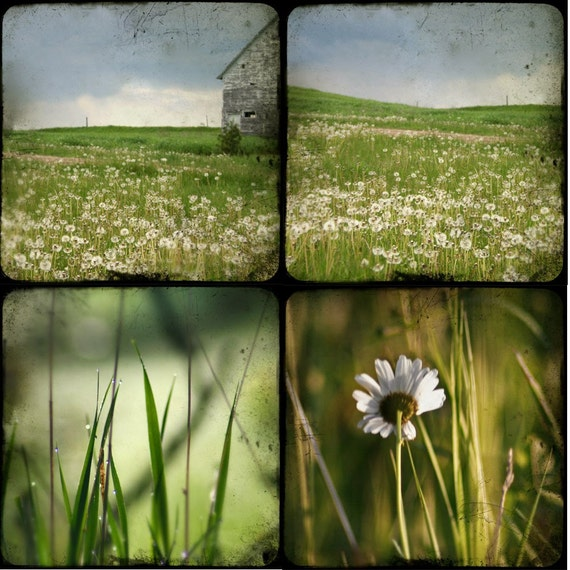 Green - four photographic prints