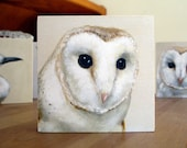 Print on Wood - Barn Owl 3