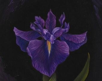 Bellender Blue Iris - Original Oil Painting on Wood 8x8