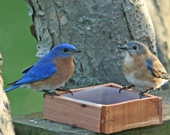Bluebird Notecard