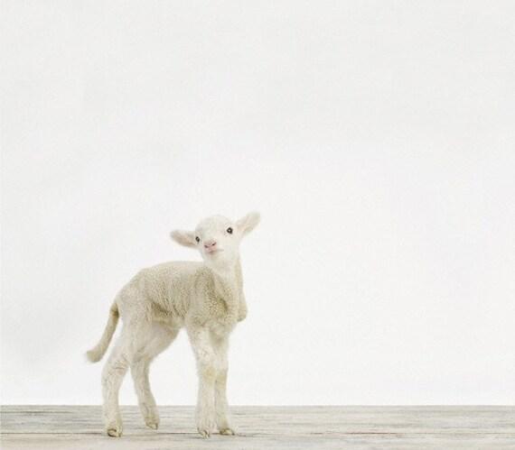 Baby Sheep (Lamb) No. 1, 7 x 8 Fine Art Print