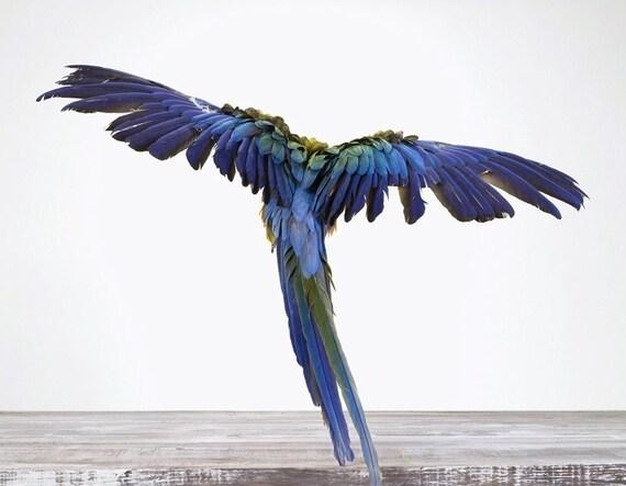 Macaw, 7 x 9 Fine Art Print