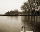 8x12 Signed Fine Art Bird Photograph- Swan Lake