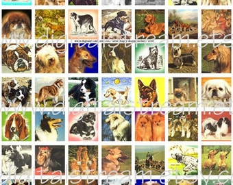 Here Doggy Doggy Digital Collage Sheet 1x1 Inch Squares 63 Different Images Scrapbooking
