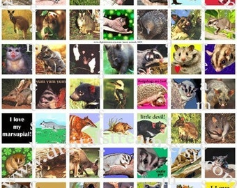 Aussie Animals Digital Collage Sheet 1x1 Inch Squares 63 Different Images Scrapbooking