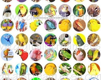 Pretty Bird One Inch Circles Digital Collage Sheet 63 Different Bottle Cap Images Scrapbooking