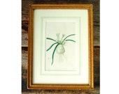 Antique 1800s Hand Painted Garden Botanical Litho Framed Piccadill7
