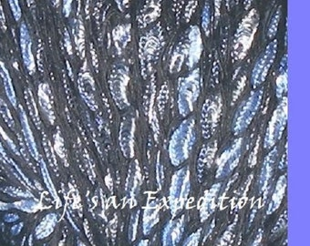 Yarn: 2 skeins Haway cotton blend knitting yarn, blue black glossy dk, by Laines du Nord, light worsted