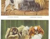 Vintage 1900s Pekingese Yorkshire Terrier and Japanese Spaniel by Louis Agassiz Fuertes