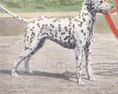 Vintage 1900s Pointer and Dalmatian by Louis Agassiz Fuertes