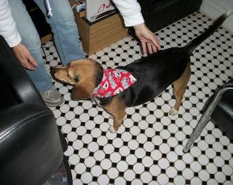 New England Patriots Dog Scarf, Small