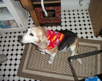Kansas City Chiefs Dog Scarf, Medium