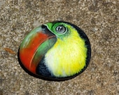 TOUCAN hand painted sea stone.