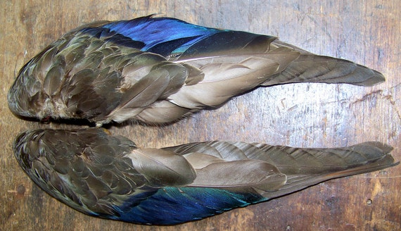 Fly Me To The Moon Wonderful Vintage Millinery Real Bird Wings