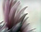 Entice - 5x7 Fine Art Photograph