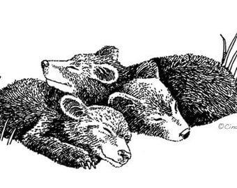 Sleeping Baby Bear Cubs Pen & Ink Print 8x10 - Black Bear Cozy Cubs by Cindy Day