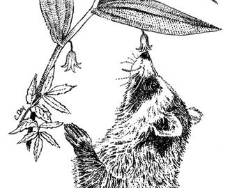 """Raccoon smelling the flowers pen and ink print - """"Lily"""""""