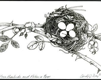 Birds Nest and botanical pen and ink print - Rosebuds and Robins Eggs