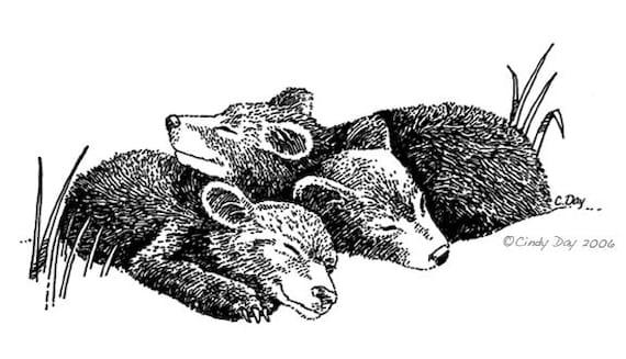 Sleeping Baby Bear Cubs Pen & Ink Print 8x10 - Black Bear Cozy Cubs by Cindy Day
