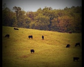 Autumn Pastures 5x5 Metallic Print