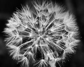 Make A Wish 4x6 Metallic Print