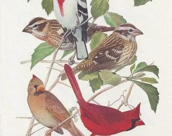 Cardinal/Grosbeak Bird Prints Plates 85 & 86