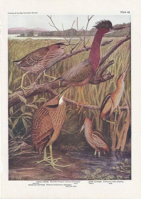Herons and Cranes Prints Plates 23 & 24