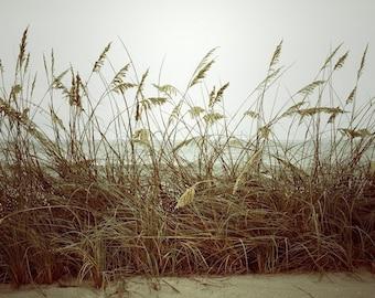 Golden Beach Wheat Grass Fine Art Print