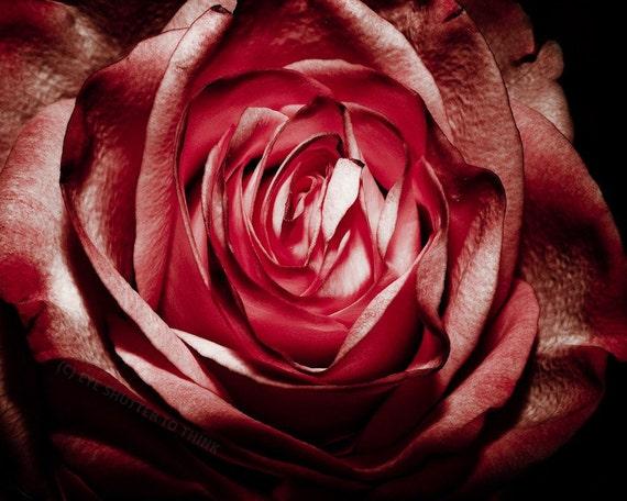Gothic Red Rose Fine Art Print - Nature, Botanical, Wildlife, Garden, Nursery Decor, Home Decor, Baby, Zen, Gift
