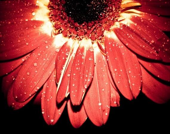 Orange Gerbera Daisy Fine Art Print - Nature, Botanical, Wildlife, Garden, Nursery Decor, Home Decor, Baby, Zen, Gift