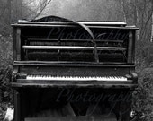 Music of the Forest- Number 2 5x7 Signed Fine Art Print