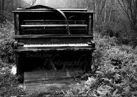 Music of the Forest- Number 1 5x7 Signed Fine Art Print