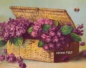 French Ruffled Victorian Violets Print Paul de Longpre Half Yard Long