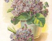 Victorian Violets, Art Print, Shabby Chic Decor