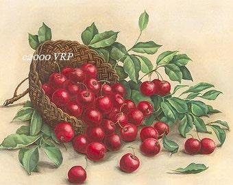 Basket of Red Cherries Print Cherry Fruit Half Yard Long