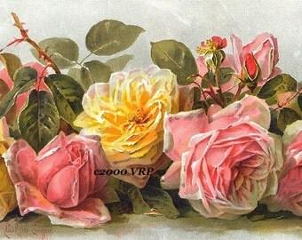 Just Too Sweet Pink Yellow Cabbage Roses Print Paul de Longpre Half Yard Long