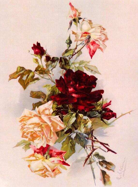 Free Ship PRINT Victorian  Summer Cabbage Roses C. Klein