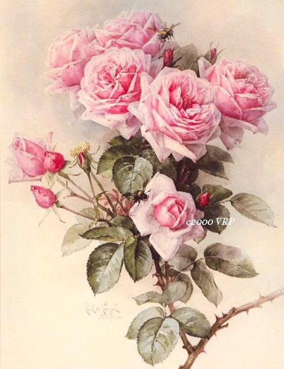 oh my victorian pink roses print paul de longpre rose 2 frame. Black Bedroom Furniture Sets. Home Design Ideas
