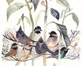 Chickadees and Avocado Tree -Large Archival Print
