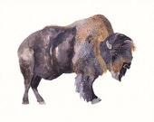 Bison - Archival Print