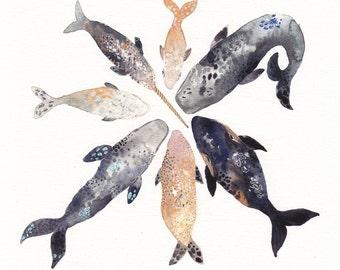 Whale Pod - Large Archival Print