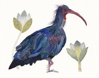 Bald Ibis - Archival Print