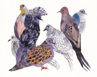 Doves and Pigeons - Archival Print