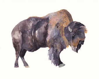 Bison - Archival Print