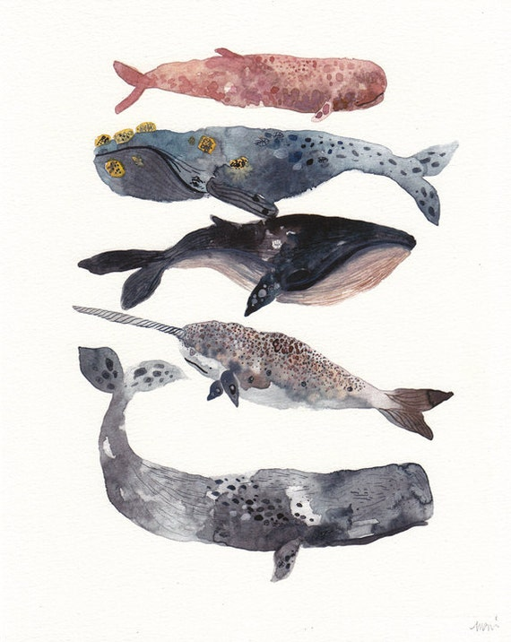 Five Whales Stacked -  Larger Archival Print